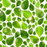 Modello senza cuciture del fondo delle foglie verdi fresche Fotografia Stock Libera da Diritti