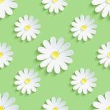 Modello senza cuciture del fondo verde della primavera con la camomilla Fotografia Stock