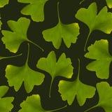 Modello senza cuciture del ginkgo biloba Backg verde della pianta medicinale della foglia Fotografia Stock Libera da Diritti