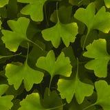 Modello senza cuciture del ginkgo biloba Backg verde della pianta medicinale della foglia Fotografie Stock Libere da Diritti