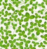 Modello senza cuciture del modello con le foglie verdi Decorazione floreale origine Immagine Stock Libera da Diritti