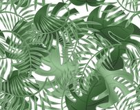 Modello senza cuciture del monstera delle foglie Piante tropicali, foglie della palma Modello senza cuciture con gli alberi esoti illustrazione vettoriale