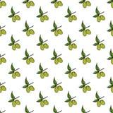 Modello senza cuciture del ramo di ulivo Progettazione dello sfondo naturale con le olive per i prodotti dei cosmetici o dell'oli Fotografia Stock Libera da Diritti