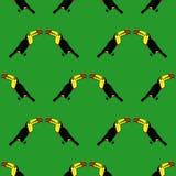 Modello senza cuciture del tucano dell'uccello Immagine Stock