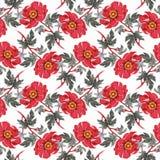 Modello senza cuciture dell'acquerello con i fiori variopinti e le foglie su fondo bianco, modello floreale dell'acquerello, fior Fotografie Stock