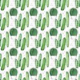 Modello senza cuciture dell'acquerello con i succulenti ed i cactus Immagine Stock Libera da Diritti