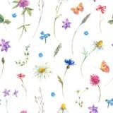 Modello senza cuciture dell'acquerello con i wildflowers illustrazione vettoriale