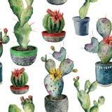 Modello senza cuciture dell'acquerello con il cactus in un vaso Opunzia dipinta a mano, saguaro in un vaso rosso e blu di verde,  royalty illustrazione gratis