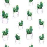 Modello senza cuciture dell'acquerello con il cactus verde in vaso bianco Immagini Stock