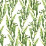 Modello senza cuciture dell'acquerello con laminaria L'illustrazione floreale subacquea dipinta a mano con le alghe lascia il ram royalty illustrazione gratis