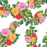 Modello senza cuciture dell'acquerello con le rose Fotografie Stock