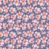 Modello senza cuciture dell'acquerello dei fiori rosa su fondo scuro Immagini Stock