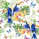 Modello senza cuciture dell'acquerello di estate con il tucano, farfalle illustrazione di stock
