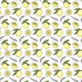 Modello senza cuciture dell'acquerello disegnato a mano Collezioni di limoni B illustrazione di stock