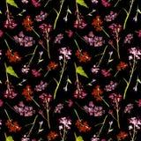 Modello senza cuciture dell'acquerello disegnato a mano con i piccoli fiori ed erbe del campo su fondo nero fotografie stock libere da diritti