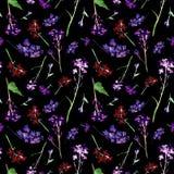 Modello senza cuciture dell'acquerello disegnato a mano con la viola del campo e piccoli fiori ed erbe rossi su fondo nero immagini stock libere da diritti