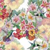 Modello senza cuciture dell'acquerello floreale tropicale con i colibris ed i fiori Pittura dell'acquerello Fotografia Stock Libera da Diritti