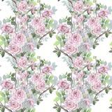 Modello senza cuciture dell'acquerello Fondo misto delle rose selvatiche Romant royalty illustrazione gratis