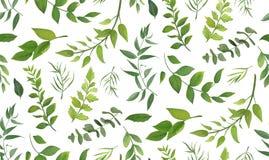 Modello senza cuciture dell'albero differente della felce della palma dell'eucalyptus, fogliame royalty illustrazione gratis