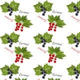 Modello senza cuciture dell'uva passa Immagine Stock Libera da Diritti
