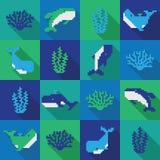 Modello senza cuciture della balena del pixel di colorfol Immagini Stock