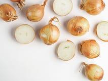 Modello senza cuciture della cipolla isolato su bianco Fotografia Stock
