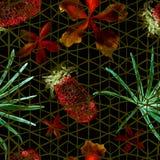 Modello senza cuciture della geometria esotica Fotografie Stock Libere da Diritti