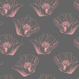 Modello senza cuciture della molla del fiore Illustrazione rossa di vettore dei papaveri Immagine Stock