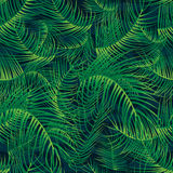 Modello senza cuciture della piena pagina verde di foglia di palma Fotografia Stock Libera da Diritti