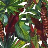 Modello senza cuciture della pittura floreale tropicale di colore di acqua Immagine Stock