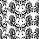 Modello senza cuciture della zebra Animale selvatico, in bianco e nero a strisce illustrazione di stock