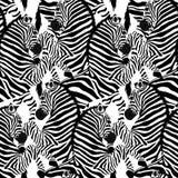 Modello senza cuciture della zebra Animale selvatico, in bianco e nero a strisce royalty illustrazione gratis