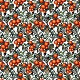 modello senza cuciture delle arance Iper-realistiche dell'acquerello royalty illustrazione gratis