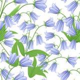 Modello senza cuciture delle campanule Fiori di Bluebell con le foglie verdi Illustrazione di vettore su priorità bassa bianca Fotografia Stock Libera da Diritti