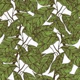 Modello senza cuciture delle fave di cacao illustrazione vettoriale
