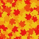 Modello senza cuciture delle foglie di acero Fotografie Stock