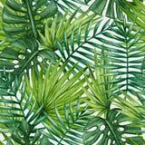 Modello senza cuciture delle foglie di palma tropicali dell'acquerello immagine stock