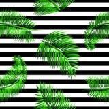 Modello senza cuciture delle foglie di palma verdi, su fondo a strisce in bianco e nero Immagine Stock Libera da Diritti