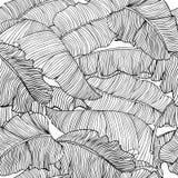 Modello senza cuciture delle foglie esotiche e bianche della banana con profili neri isolati su un fondo trasparente illustrazione di stock
