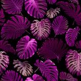 Modello senza cuciture delle foglie tropicali Fotografia Stock