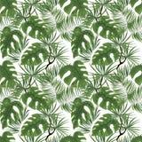 modello senza cuciture delle foglie tropicali verde intenso su backgr bianco fotografia stock