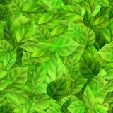 Modello senza cuciture delle foglie verdi Fotografie Stock