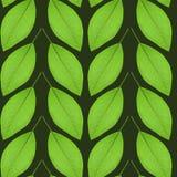 Modello senza cuciture delle foglie verdi su un fondo nero Immagine Stock