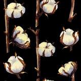 Modello senza cuciture delle inflorescenze dei ramoscelli e del cotone su un fondo nero Illustrazione dell'acquerello royalty illustrazione gratis