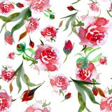 Modello senza cuciture delle rose rosa dell'acquerello Illustrazione floreale su w royalty illustrazione gratis