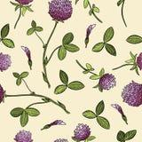 Modello senza cuciture di boho botanico del trifoglio Immagine di vettore royalty illustrazione gratis