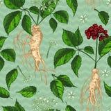 Modello senza cuciture di colore di schizzo botanico realistico dell'inchiostro con la raccolta floreale delle erbe della radice, illustrazione di stock