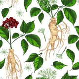 Modello senza cuciture di colore di schizzo botanico realistico dell'inchiostro con la radice, i fiori e le bacche del ginseng is royalty illustrazione gratis