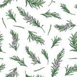 Modello senza cuciture di erbe con i ramoscelli dei rosmarini su fondo bianco Contesto con l'erba fragrante di fioritura Vettore  illustrazione di stock