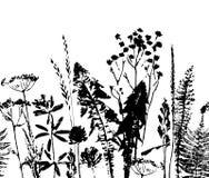 Modello senza cuciture di erbe Confine botanico Fondo dell'erba di vettore illustrazione vettoriale